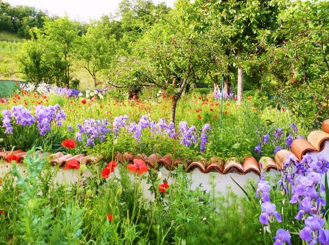 Garden with iris, poppy and alium