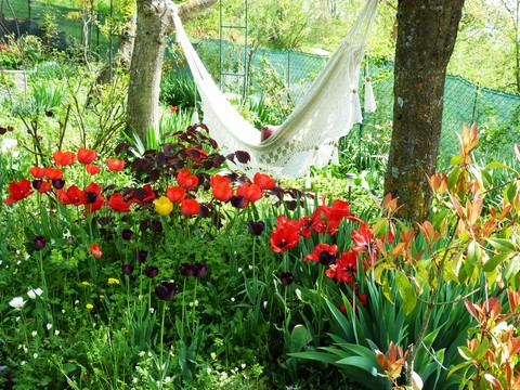 hammock with tulips